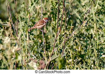 animal little sparrow on a branch