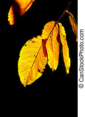 image of an autumn leaves, season concept