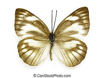 Image of Appias libythea olferna Butterfly (Striped...