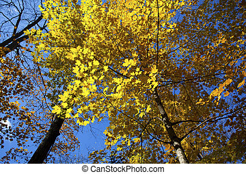 image of autumn trees