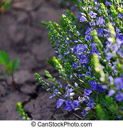 image of beautiful bright flowers