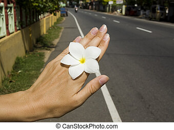 image of beautiful flower in woman hand