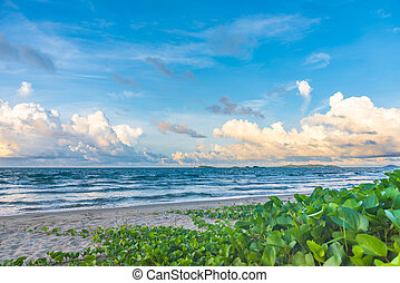 image of beautiful sand beach.