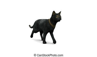 image of black cat walking