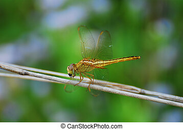 Image of blurry golden dragonfly