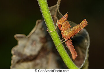Image of brown grasshopper on green branches. Insect Animal....