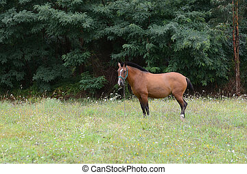brown horse grazes on a green meadow