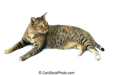Image of cat isolated on white background.