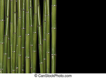 image of classic hard bamboo with space for text