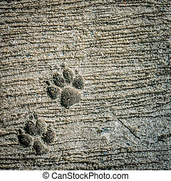 Dog footprint on cement