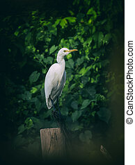 Image of egret on tree branch. in forest, Thailand. Vintage Filter