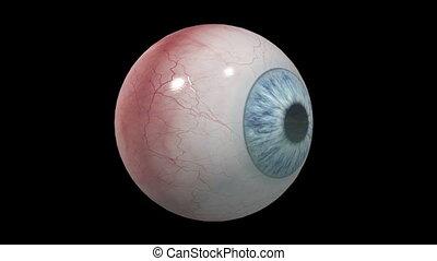 eyeball - image of eyeball