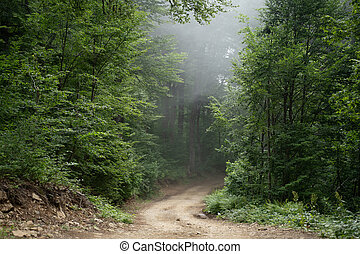 Image of foggy forest on summer