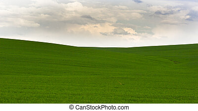 Image of green grass field and bright grey sky.