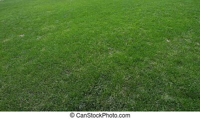 green grass - image of green grass