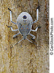 Image of Hemiptera bug on tree. Insect. Animal.