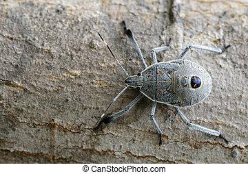 Image of Hemiptera bug on tree. Insect. Animal.