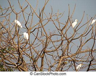 Image of Heron, Bittern or Egret on tree White Bird. Animal...