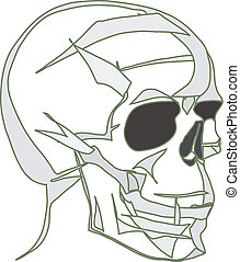 image of human skull  by black empty eye sockets