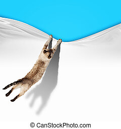 Image of jumping Siamese cat playing with with sheet