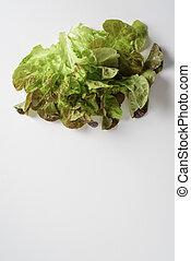 image of lettuce leaf on white background for advertising