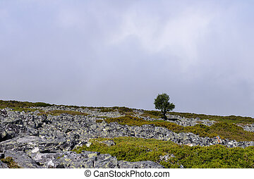 lonely tree on a mountain against the sky