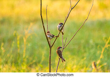 the summer of sparrows sitting on a branch