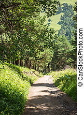 Image of road in forest