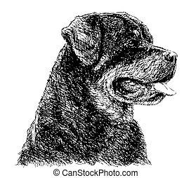 Rottweiler - Image of Rottweiler hand drawn vector