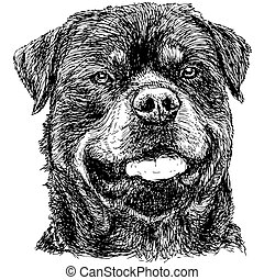 Rottweiler - Image of Rottweiler hand drawn vector