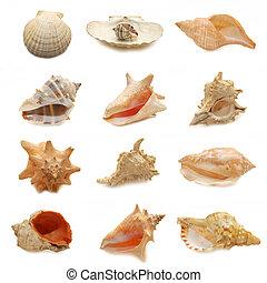 image of seashells on white background