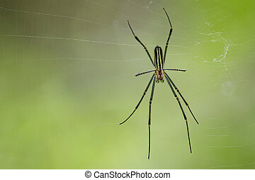 Image of spider in the net. Insect Animal