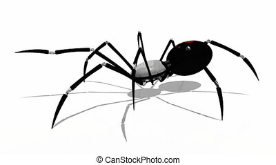 spider - image of  spider