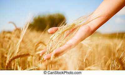 Image of spikelets in hands