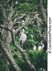 Image of stork perched on tree branch. - Vintage Filter