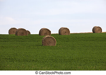 straw bales on green field