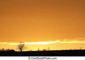 autumn sunset with soliraty tree - Image of the autumn ...