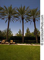 image of three palm trees