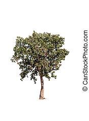 image of trees isolated on white background