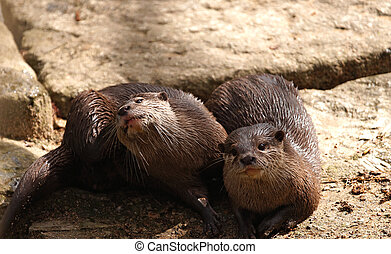 Image of two marmots in the wild.
