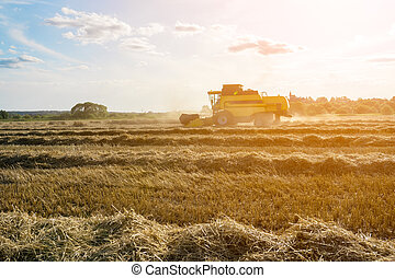 Image of wheat field working combine harvester.