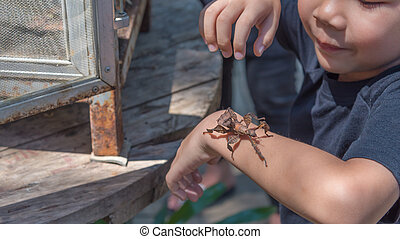 asian boy have leaf insect on his hand. - image of young ...
