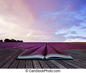 image, pages, livre, créatif, paysage, lavande, concept