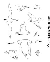image, set., noir, dessin, silhouette, vecteur, ligne, birds.