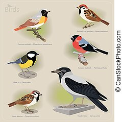 Image set of birds