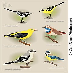Image set of birds: white wagtail, yellow wagtail, golden...