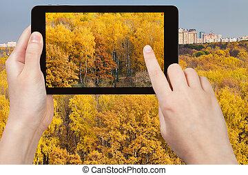 image, tablette, jaune, automne, pc, bois