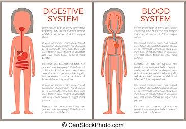 Imagem Digestivo Intestino área Intestino Sistema