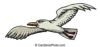imagem, caricatura, gaivota