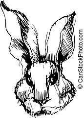 imagem, coelho, orelhas longas